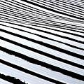 Stripy Land by Jez C Self