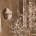 Stroll Garden 4 by Audrey Venute
