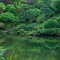 Strolling Pond Serenity by Don Schwartz