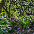 Strolling Through White Point Garden by Dale Powell