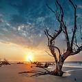 Strong Tree by Christine U Jones