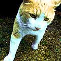 Strut by BadAss Cats