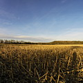 Stubble Field  by William Moore
