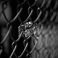 Stuck In A Fence by Mike Oistad