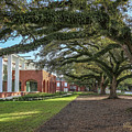 Student Union Oaks by Gregory Daley  MPSA