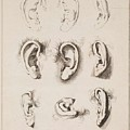 Studies Ears Anonimo, Blooteling Abraham by Blooteling Abraham