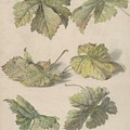 Studies Of Vine Leaves, Willem Van Leen, 1796 by Willem van Leen