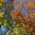 Study For Autumn 2 by Steve Parrott