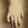 Study Of A Hand by European 19th Century
