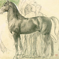 Study Of A Horse With Figures by Edgar Degas