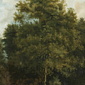 Study Of A Tree by Attributed to Jules Coignet