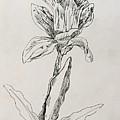 Study Of Flower by Alejandro Lopez-Tasso