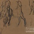 Study Of Horses by Edgar Degas