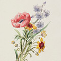 Study Of Wild Flowers by English School