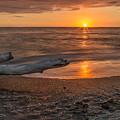 Stump Sunset by Karin Pinkham