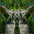 Stumped by Roger Monahan
