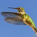Stylized Hummingbird In Hover by Rikk Flohr
