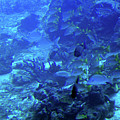 Submarine Underwater View by Tatiana Travelways
