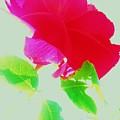 Subtle Rose by Daniele Smith