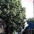 Suburban Tree by Frank J Casella