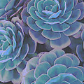 Succulent 3 by David Hansen