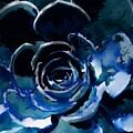 Succulent In Blue by Lauren Lamb