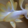 Succulent Season by William Tasker