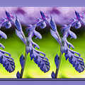 Succulent Swirl by Lucy VanSwearingen