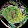 Succulent Twirled In A Bubble by Delores Malcomson