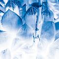Succulents In Bleu by Heather Joyce Morrill