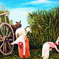 Sugarcane Worker 1 by Jose Manuel Abraham