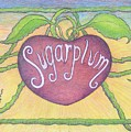 Sugarplum #2 by Cynthia Silverman