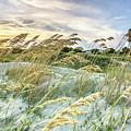 Sullivan's Island Breeze by Donnie Whitaker