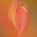 Sumac Leaf by Ramona Murdock