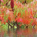 Sumac Tree Autumn Reflections by Gill Billington