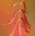 Sumac Twig by Ramona Murdock