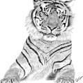Sumatran Tiger by Rosanna Maria
