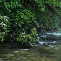 Summer Along Birch River by Thomas R Fletcher