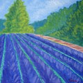 Summer At The Lavender Farm by Justin  Holdren