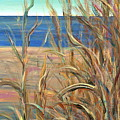 Summer Beach Grasses by Nadine Rippelmeyer