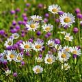 Summer Blooms by Veikko Suikkanen