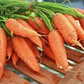 Summer Carrots by KG Thienemann