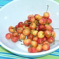Summer Cherries by Nancy Ferrier