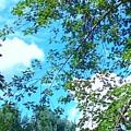 Summer Clouds by Debra Lynch