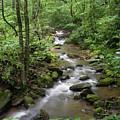 Summer Creek by Jill Lang