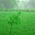 Summer Downpour by Karen Wallace