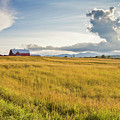 Summer Farmscape by Alan L Graham