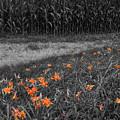 Summer Fields by Dylan Punke