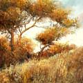 Summer Fields by Sally Seago