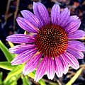 Summer Flower In Fading Light by Doug Terry